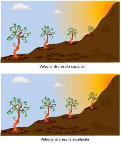 Tree Growth
